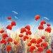 """DEInternationalGraphics """"Dancing Poppies"""" von Hilary Mayes, Kunstdruck"""