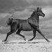 """DEInternationalGraphics Acrylglasbild """"Black Horse"""" von Jorge Llovet, Fotodruck"""