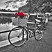 "DEInternationalGraphics Acrylglasbild ""Romantic Roses I"" von Assaf Frank, Fotodruck"
