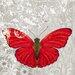 """DEInternationalGraphics """"Red Butterfly I"""" von Alan Hopfensperger, Kunstdruck"""