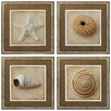 Propac Images Sepia Shell 4 Piece Framed Photographic Print Set