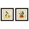 PTM Images Natural History Fruits 2 Piece Framed Graphic Art