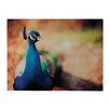 Sterling Industries Peacock Photographic Print on Canvas (Set of 2)