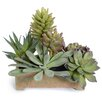 New Growth Designs Faux Mixed Succulents Planter