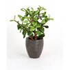 Distinctive Designs Silk Greenery Jade Desk Top Plant in Pot (Set of 2)