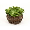 Distinctive Designs Artificial Hen and Chicken Succulents Desk Top Plant in Basket (Set of 2)