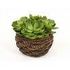 Distinctive Designs Artificial Hen and Chicken Succulents Desk Top Plant in Basket