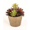 Distinctive Designs Silk Greenery Hen & Chicken with Cactus Desk Top Plant in Pot