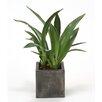 Distinctive Designs Silk Orchid Blades Desk Top Plant in Planter