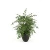 Distinctive Designs Silk Maidenhair Fern Floor Plant in Planter