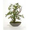 Distinctive Designs Silk Japanese Maple Bonsai Tree in Bowl