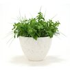 Distinctive Designs Silk Basil, Fern and Grass Desk Top Plant in Planter