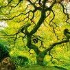 Eurographics Japanese Marple Tree Graphic Art Glass Art