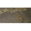 "Emser Tile 12"" x 24"" Slate Field Tile in Rustic Gold"