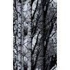 WallPops! Birch Forest Premium Window Film