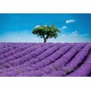 Brewster Home Fashions Ideal Decor Provence Wall Mural