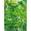 Brewster Home Fashions Ideal Decor Bamboo Wall Mural