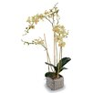 Wildon Home ® Faux Wild Phalaenopsis Orchid