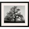 Wildon Home ® 'Oak Tree, Sunset City, California, 1932' by Ansel Adams Framed Photographic Print
