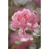 Komar Fototapete 'Bouquet' - 184 x 254 cm