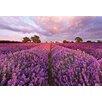 Komar Lavendel 1.27m L x 184cm W Wallpaper