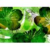 Komar Aquarell 2.5m L x 350cm W Wallpaper