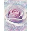 Komar Delicate Rose 2.48m L x 184cm W Wallpaper