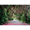 Komar Wicklow Park 2.54m L x 368cm W Roll Wallpaper
