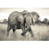 Komar Tapete Elephant 248 cm L x 368 cm B