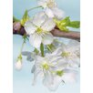 Komar 2 Piece Blossom Flower Wall Mural Set