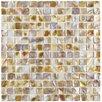"""EliteTile Shore 0.75"""" x 0.75"""" Square Seashell Mosaic Tile in Natural"""