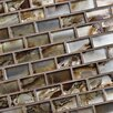 "EliteTile Splendor 0.88"" x 1.88"" Subway Glass Mosaic Tile in Champagne"