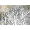 Parvez Taj Frosty White Branches Painting Print on Wrapped Canvas