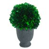 A&B Home Group, Inc Preserved Boxwood Ball in Pot