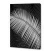 Menaul Fine Art 'Palm Frond Negative' by Scott J. Menaul Graphic Art on Wrapped Canvas