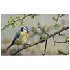 Fallen Fruits Blue Bird Printed Doormat