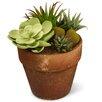 National Tree Co. Succulent Floor Plant in Pot
