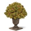 National Tree Co. Pine Porch Bush with 50 Clear Lights