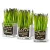 National Tree Co. 3 Piece Family Quotes Printed Grass in Square Jar Set