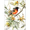 Americanflat Baltimore Oriole by Suren Nersisyan Painting Print