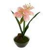 Red Vanilla Amaryllis Floral Arrangement