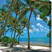 West of the Wind Outdoor Canvas Art Palms #1 Framed Photographic Print on Wrapped Canvas