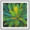 Printfinders 'Agave' by Jillian Design Framed Photographic Print