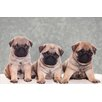 Akzente Pug Whelps Gallery Doormat