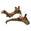 Enrico Jungle Driftwood Wood 2 Piece Tealight Holder Set