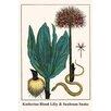 Buyenlarge 'Katherine Blood Lilly and Sunbeam Snake' by Albertus Seba Graphic Art