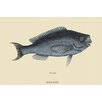 Buyenlarge 'Blue Fish' by Catesby Catesby Canvas Art