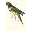 Buyenlarge Patagonian Parakeet Macaw Cyanoliseus Patagonus by Edward Lear Graphic Art