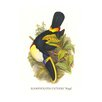 Buyenlarge 'Cuvier's Toucan' by John Gould Graphic Art