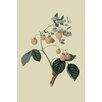 Buyenlarge 'Yellow Antwerp Raspberry' by William Hooker Graphic Art